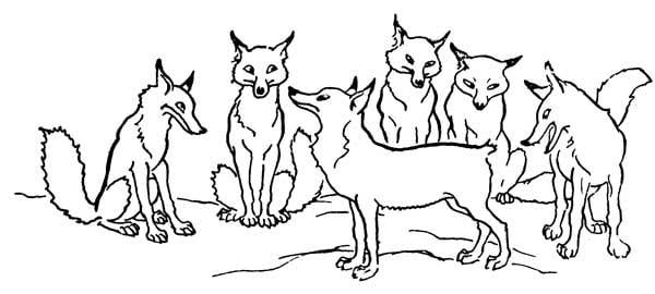 লেজকাটা শেয়াল - ঈশপের গল্প